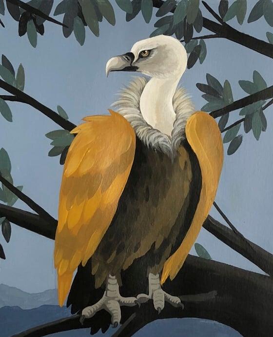 Image of Buitre leonado