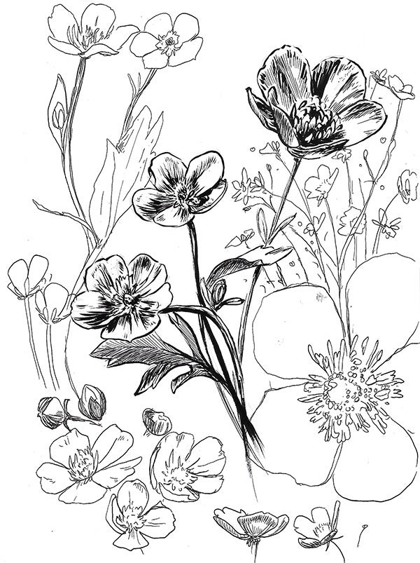 Image of Buttercup Print