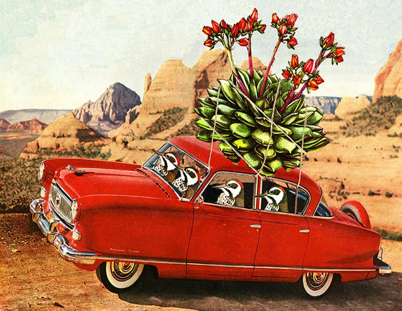 Image of Some Arizona peckers make off with some hens and chicks. Limited edition collage print.