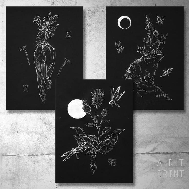 Image of Baneful Herbs portfolio