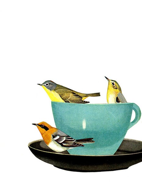 Image of Warbler wake up call. Limited edition collage print.