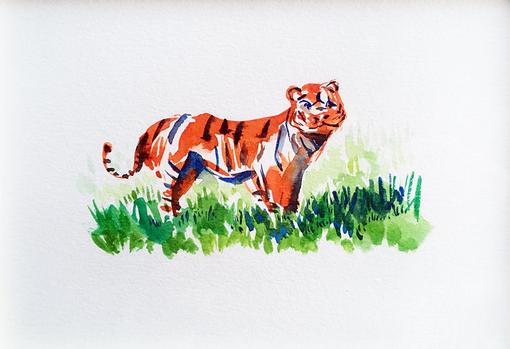 Image of Aquarelle de Tigre