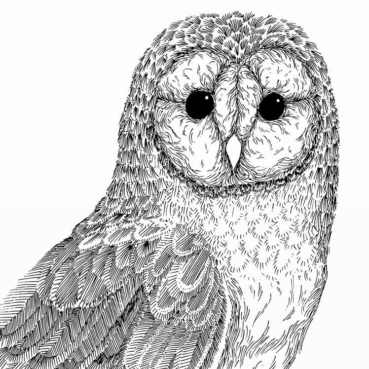 Image of Print: Barn Owl