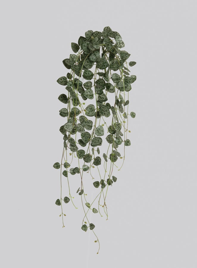 Image of FAUX HANGING PLANT - SWEETHEART VINE
