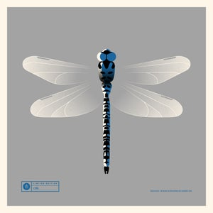 Image of Dragonfly Artprint Blue Version