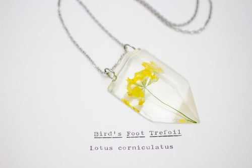 Image of Bird's Foot Trefoil (Lotus corniculatus) - Small #1