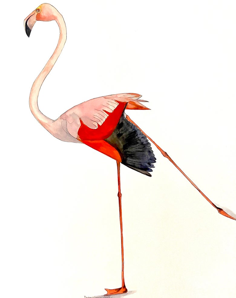 Image of Flamingo lady at the zoo