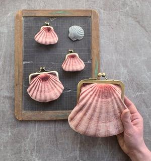 Image of Seashell, large coin & card purse, velvet shell