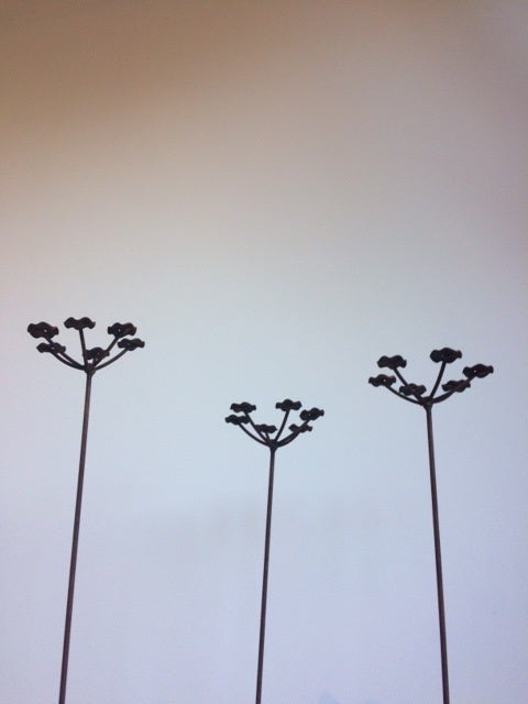 Mini Cow Parsley