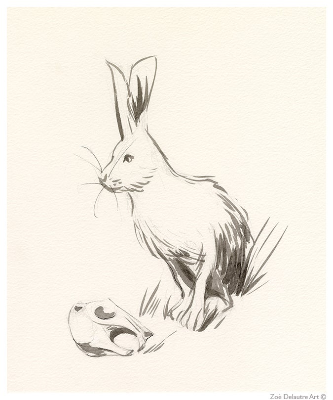 Image of Hare Memento Mori