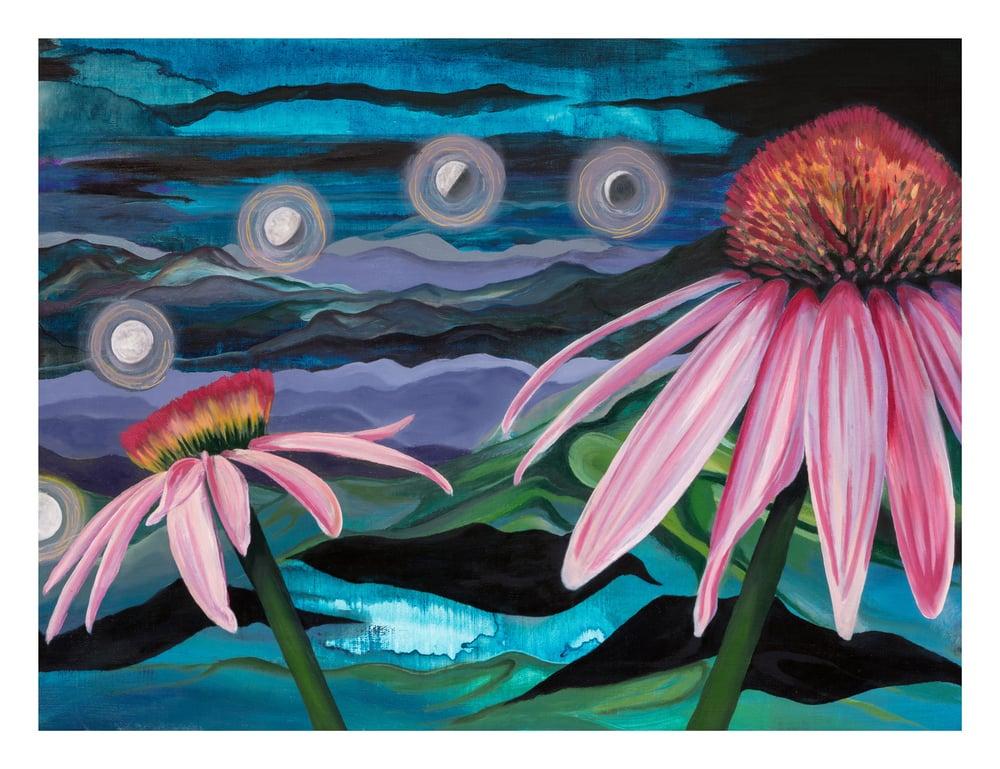 Image of Echinacea (print)