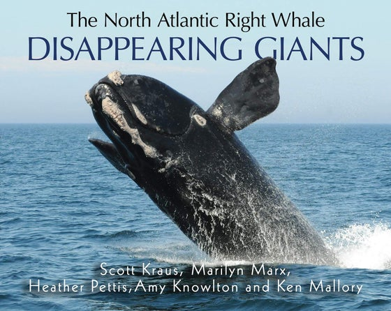 Image of Disappearing Giants: The North Atlantic Right Whale