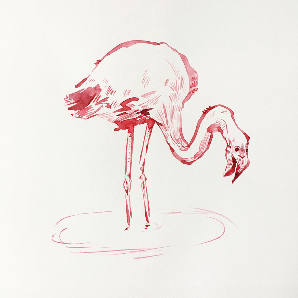 Image of Aquarelle d'un flamand rose