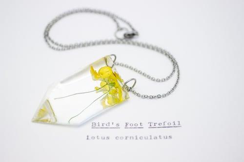 Image of Bird's Foot Trefoil (Lotus corniculatus) - Small #3