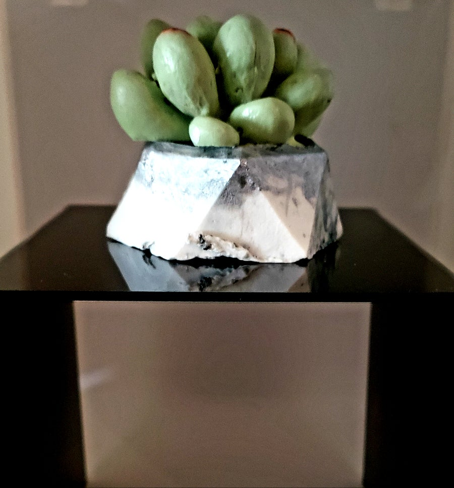 Image of Succulent soap