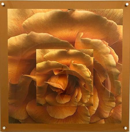 """Image of Orange Petals 24""""x24"""""""