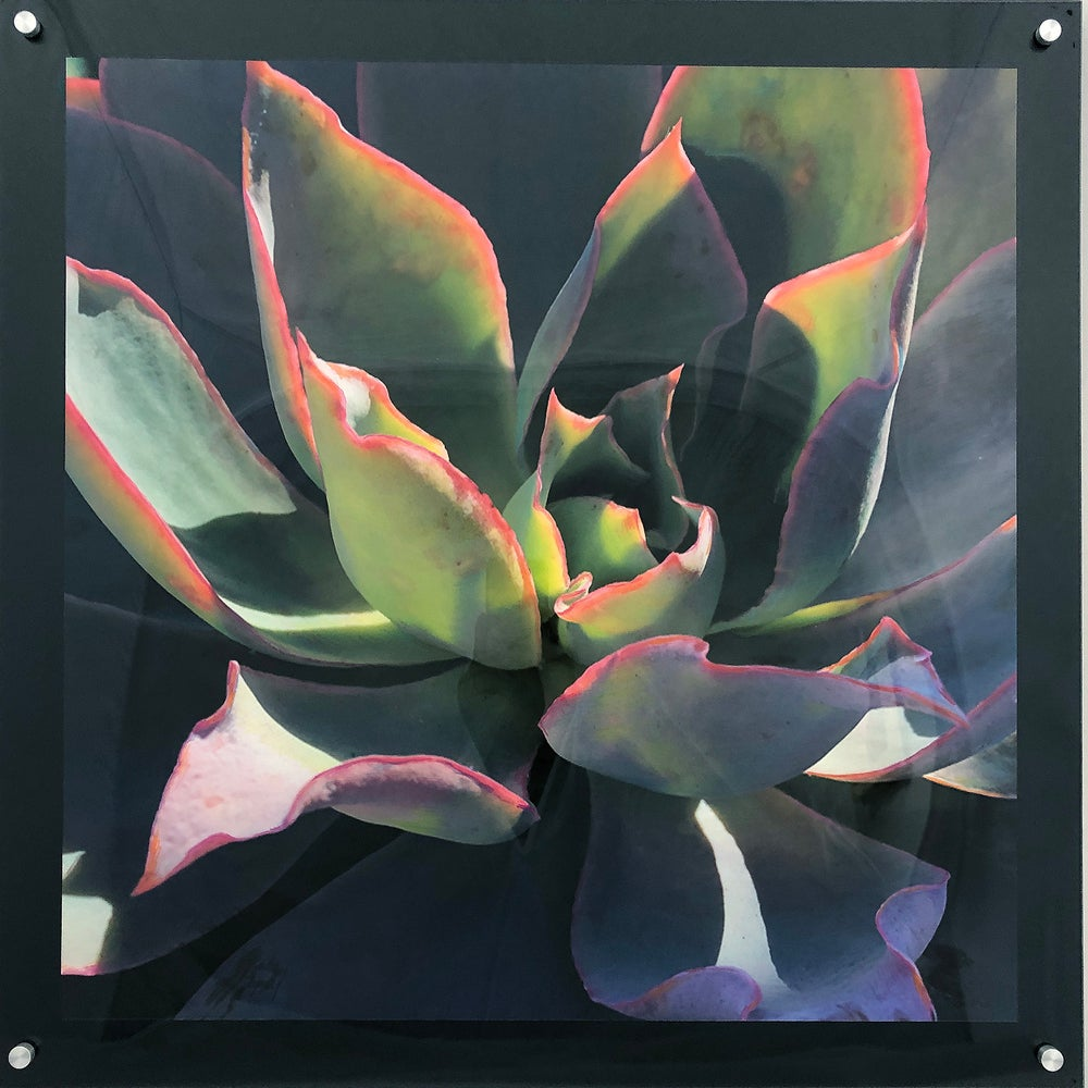 "Image of Succulent in the Morning Sun 24""x24"""