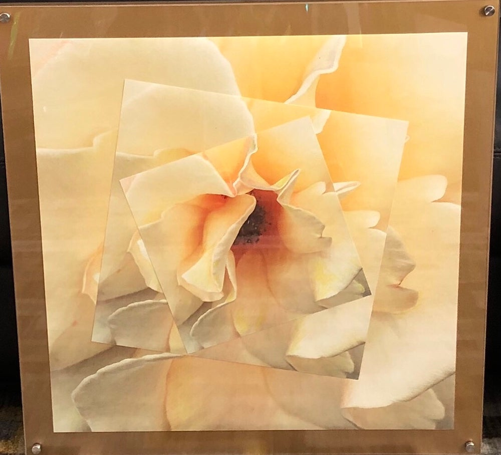 "Image of Pale Yellow Rose 24""x24"""