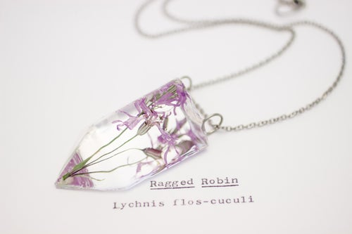Image of Ragged Robin (Lychnis flos-cuculi) - Small #2