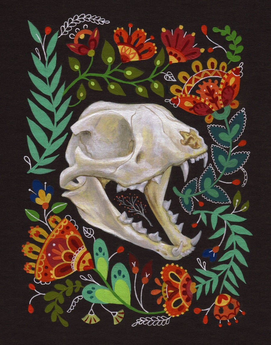 Image of Cat Skull
