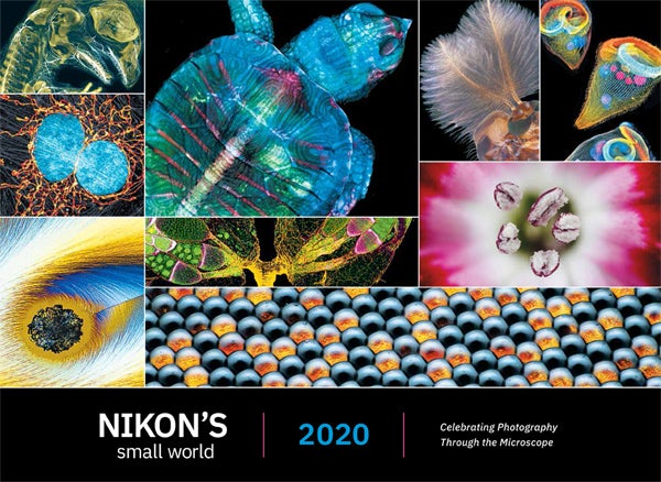 Image of 2020 Nikon Small World Calendar Limited Time Promotion