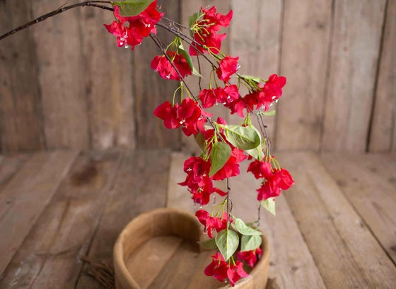 Image of Draping Bougainvillea Branch