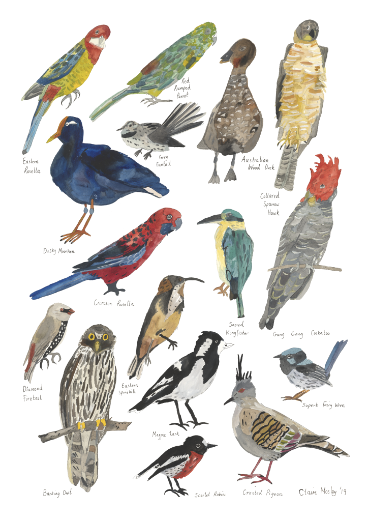 Image of Birds of Narrm Two ~ Prints