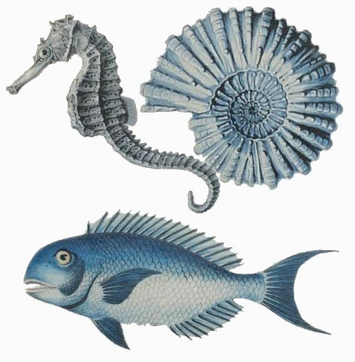 Blue Fish and Seahorse Tile