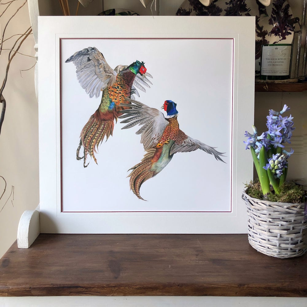 Image of 'Fighting Pheasant' Limited Edition Prints