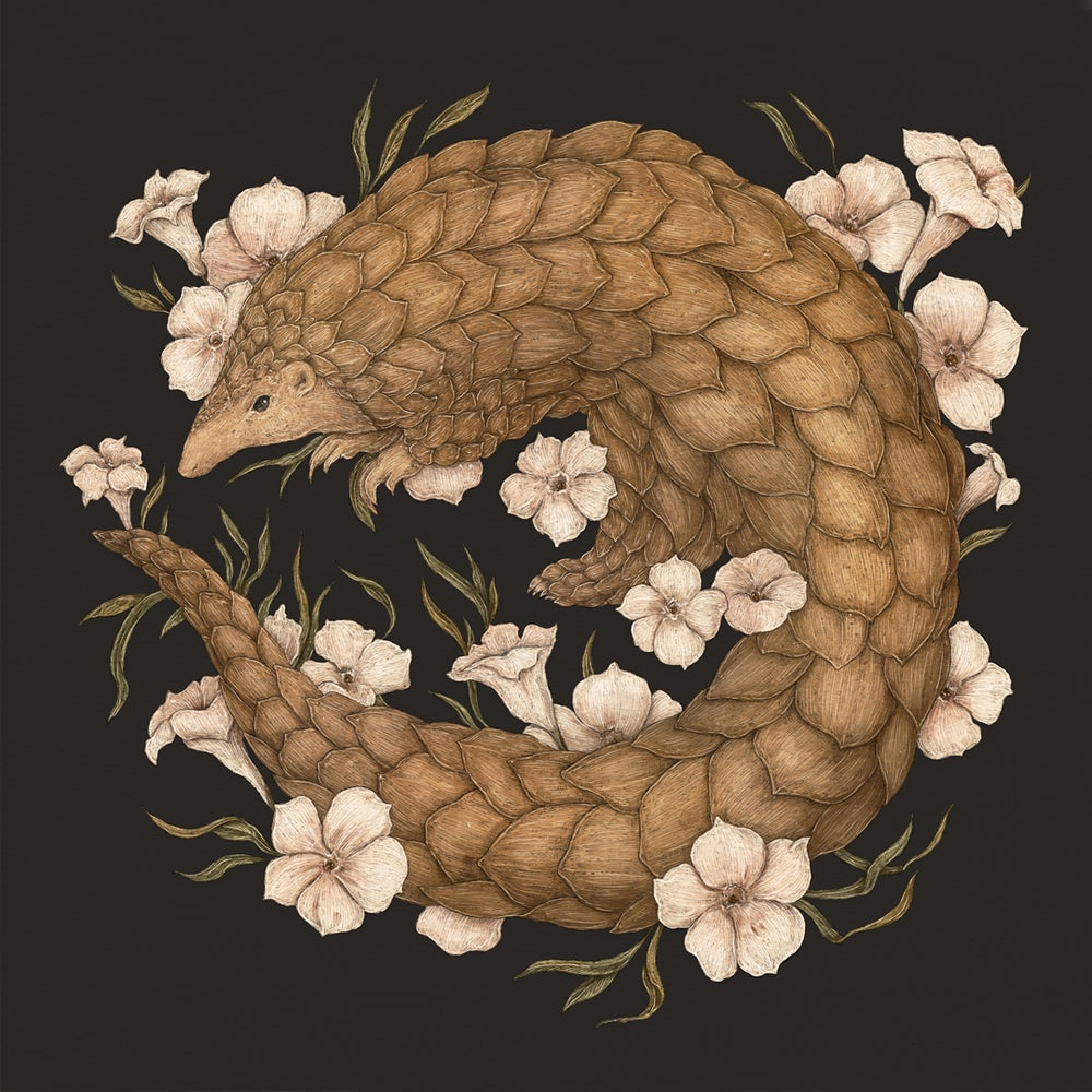 Image of Pangolin Print