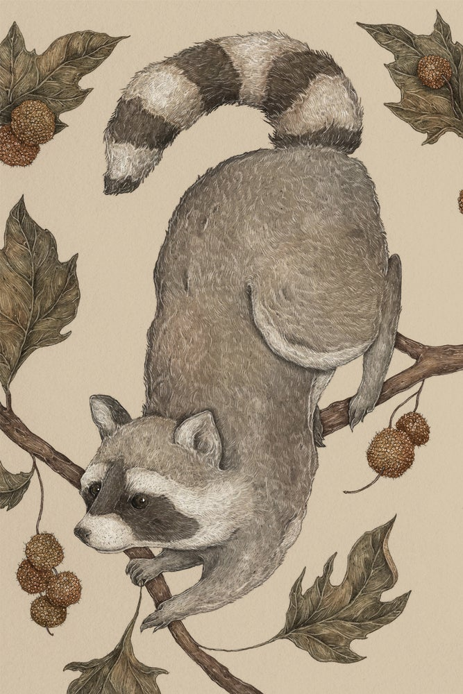 Image of The Raccoon and Sycamore Print