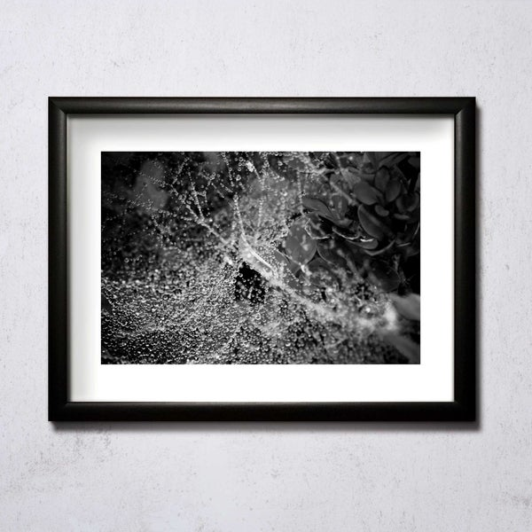Image of Wet Web A4/A3 photographic print