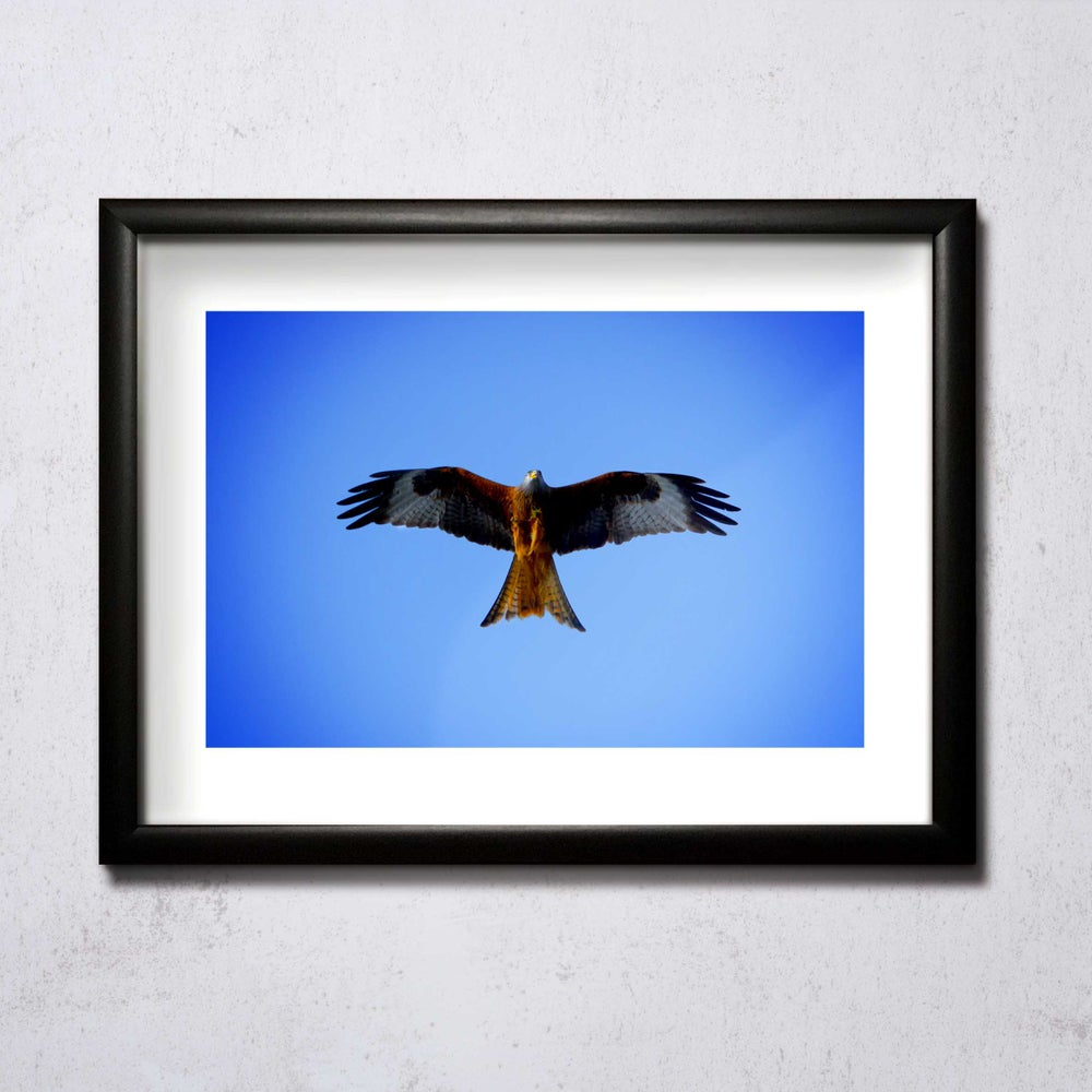 Image of Red Kite A4/A3 photographic print