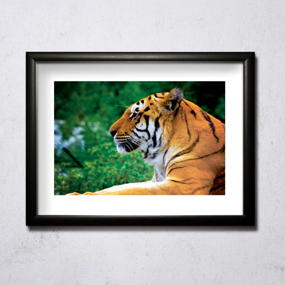 Image of Majestic A4/A3 photographic print