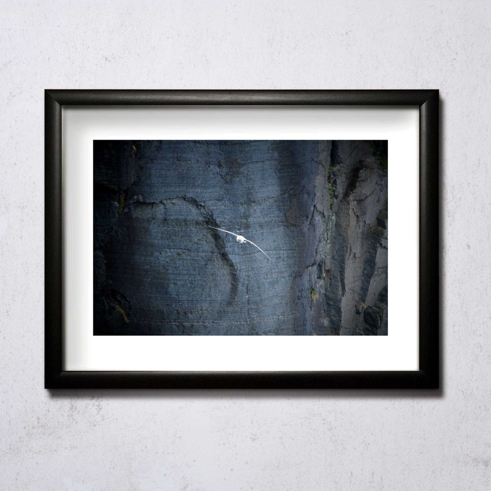 Image of Gull In Front Of Cliff A4/A3 photographic print