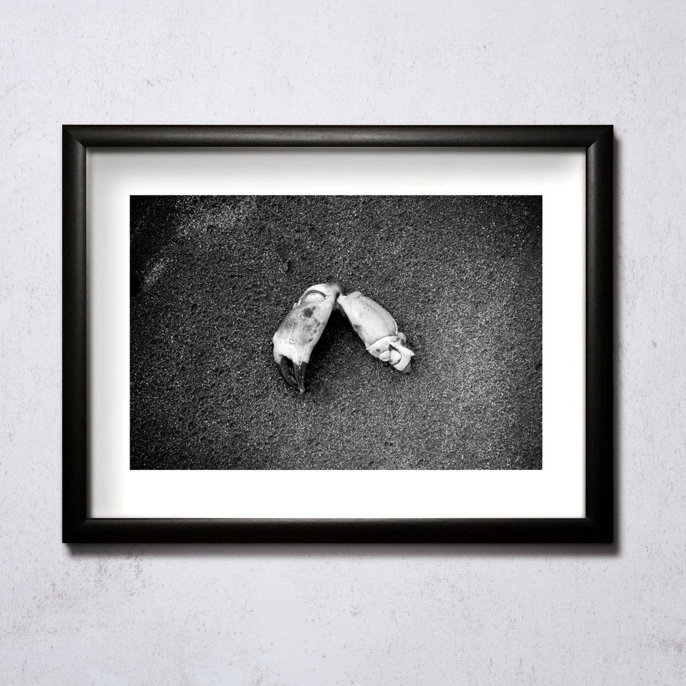 Image of Crab Claw A4/A3 photographic print