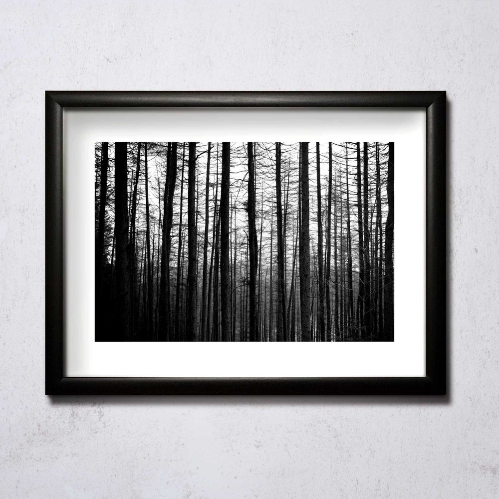 Image of  Barkcode A4/A3 photographic print