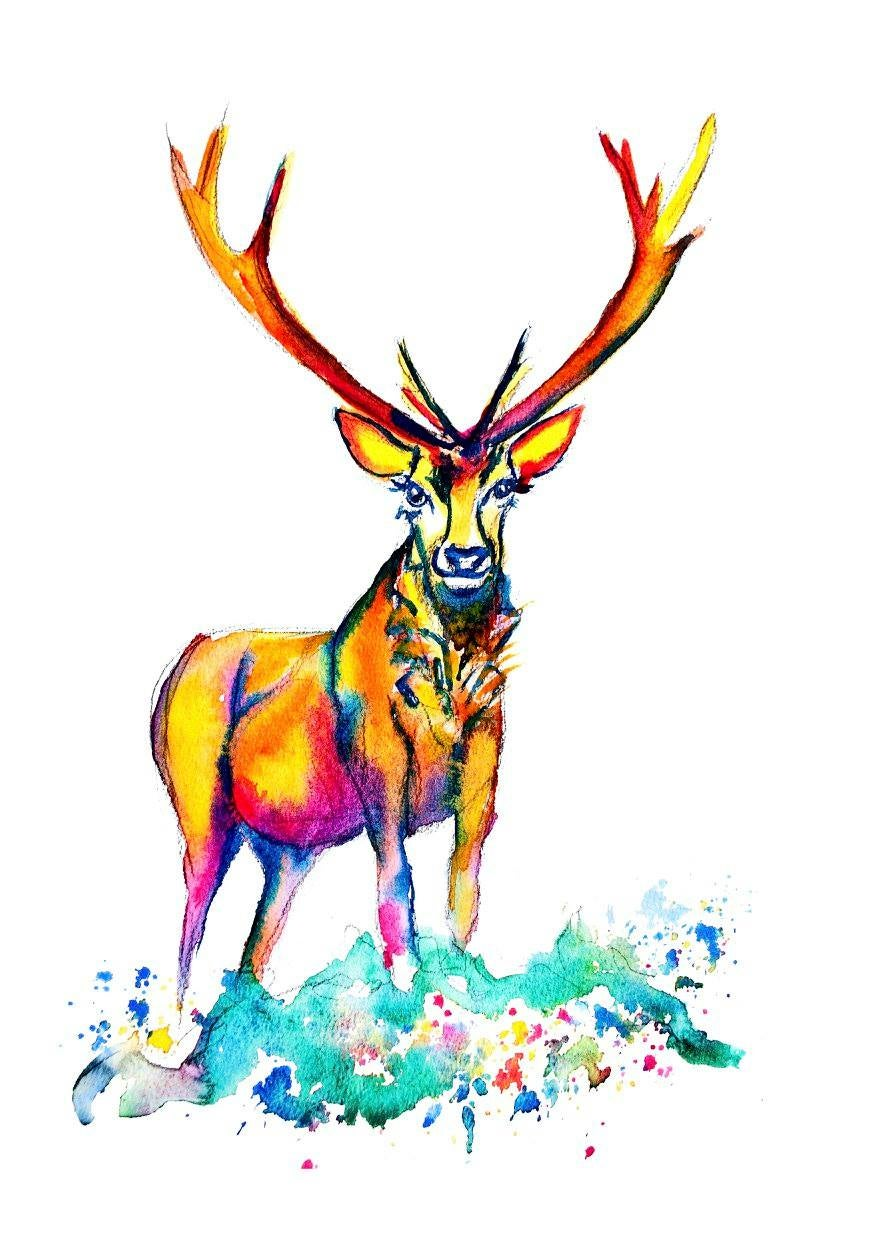 Colourful Stag