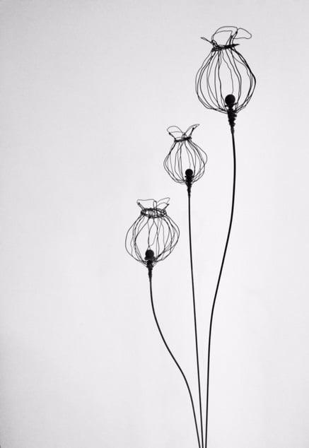 Image of Triple Poppy seeds