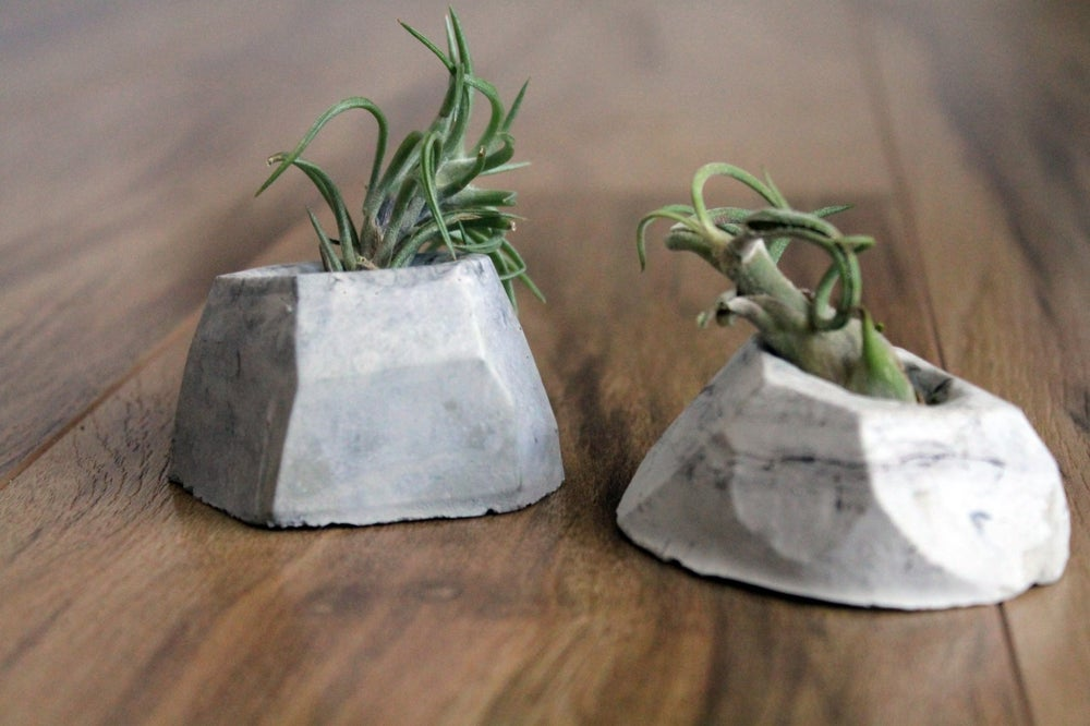 Image of Cement Planter DIY Kit