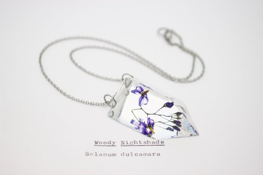 Image of Woody Nightshade (Solanum dulcamara) - Small #2