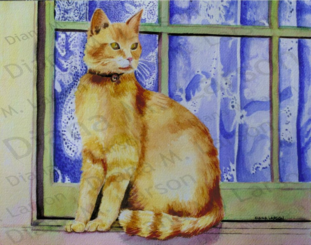 Image of Rusty the Cotswold Cat