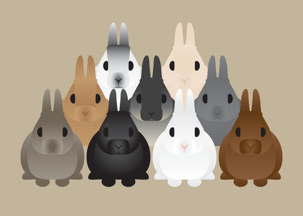 Rabbit Collection