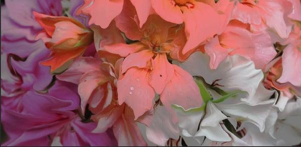 Image of Silk Cashmere Rouge Azalea