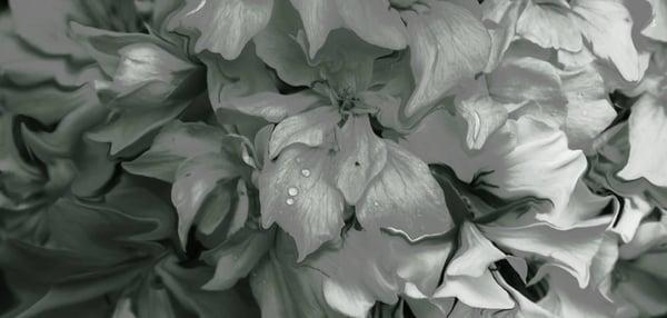 Image of Silk Cashmere Charcoal Azalea