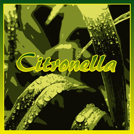 Image of Citronella