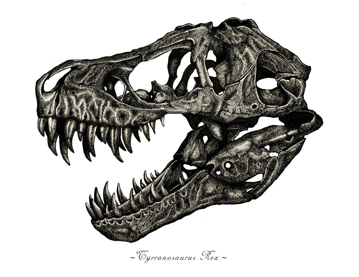 Image of Tyrannosaurus Rex Skull