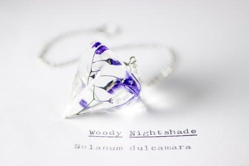 Image of Woody Nightshade (Solanum dulcamara) - Pendulum #1