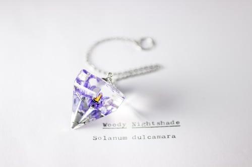 Image of Woody Nightshade (Solanum dulcamara) - Pendulum #3