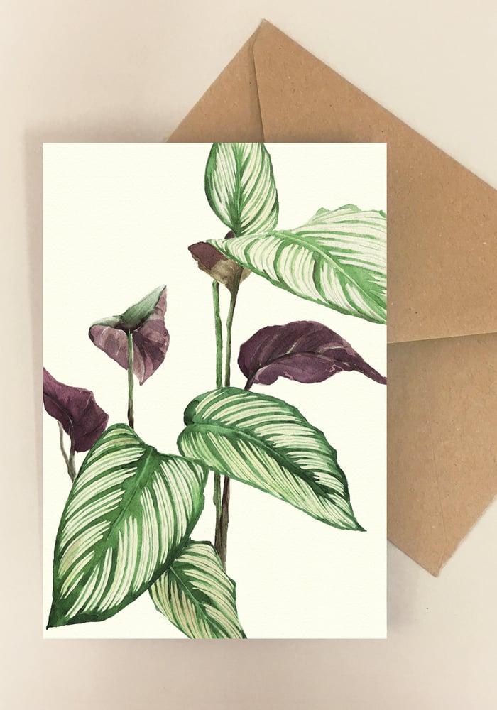 Image of 5 Notecards - Folded - Calathea No 1016